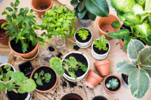 plants for a rooftop garden